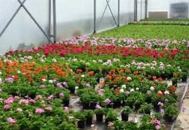 Serre fleurs